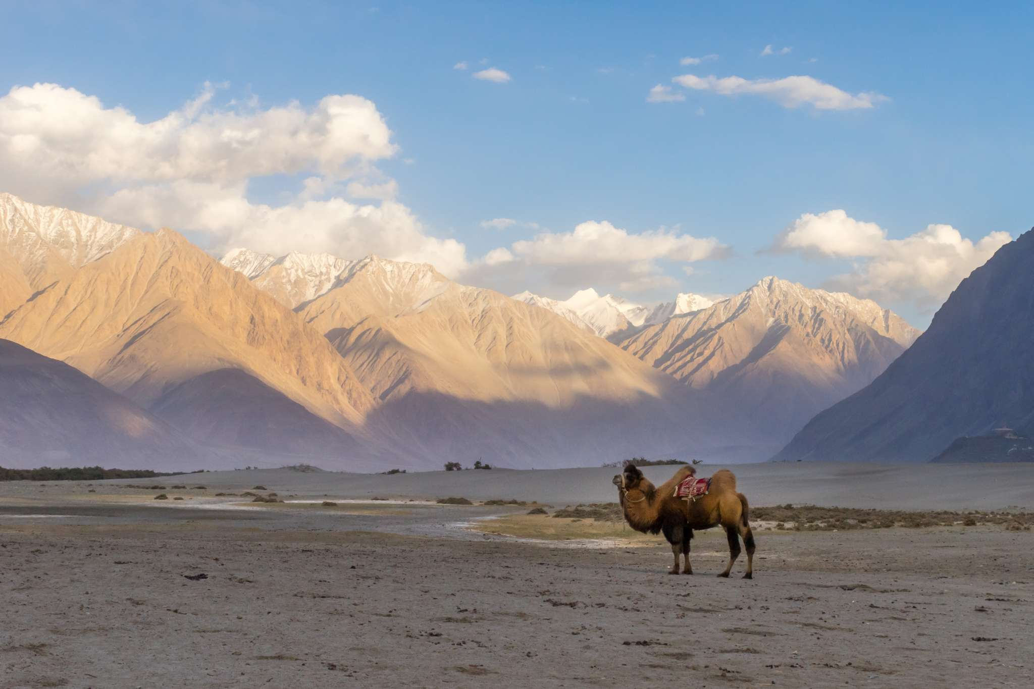 Amazing Things to do in Nubra Valley for Thrill Lovers